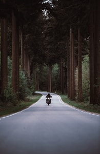 man riding black motorcycle on road between forest