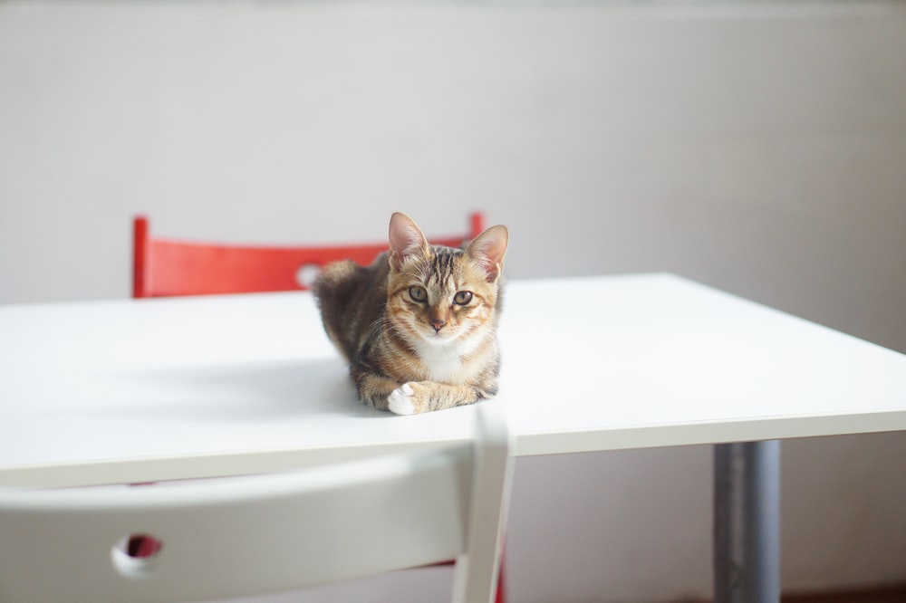 brown tabby cat on white wooden table