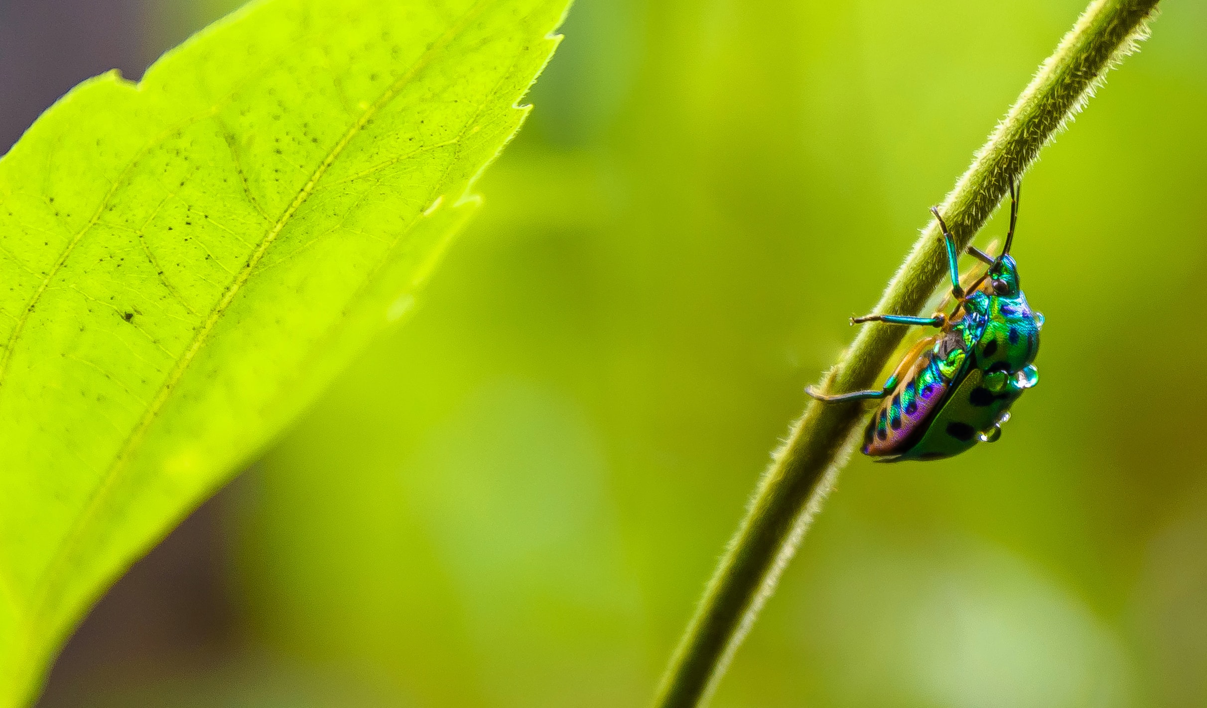 irisdescent insect on leaf branch