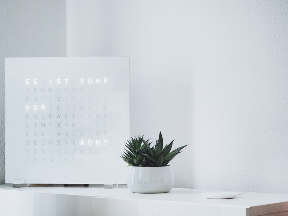 green succulent plant on white sideboard