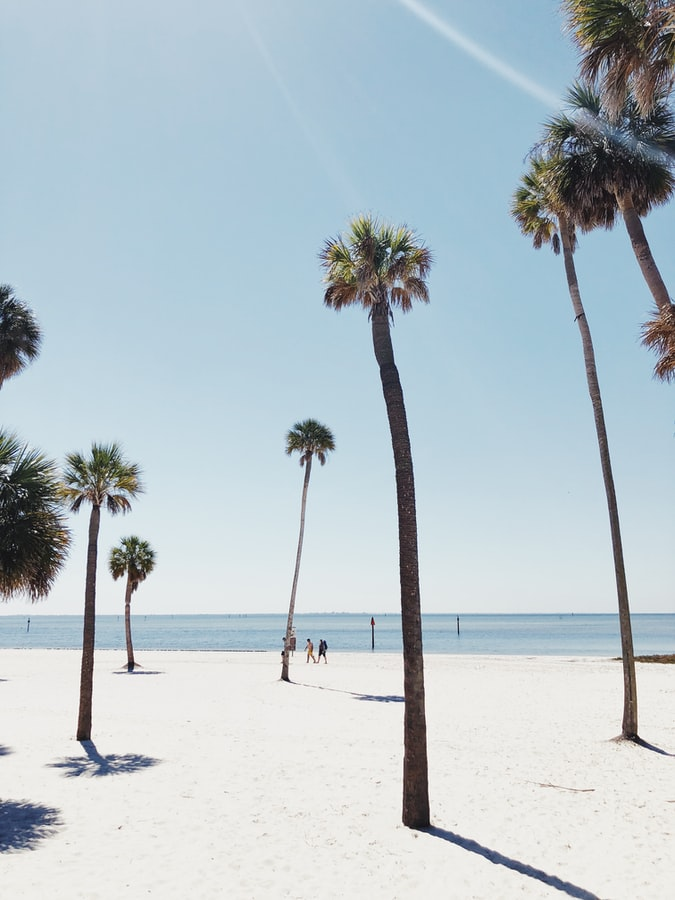 palm trees on the beach in Tampa, FL
