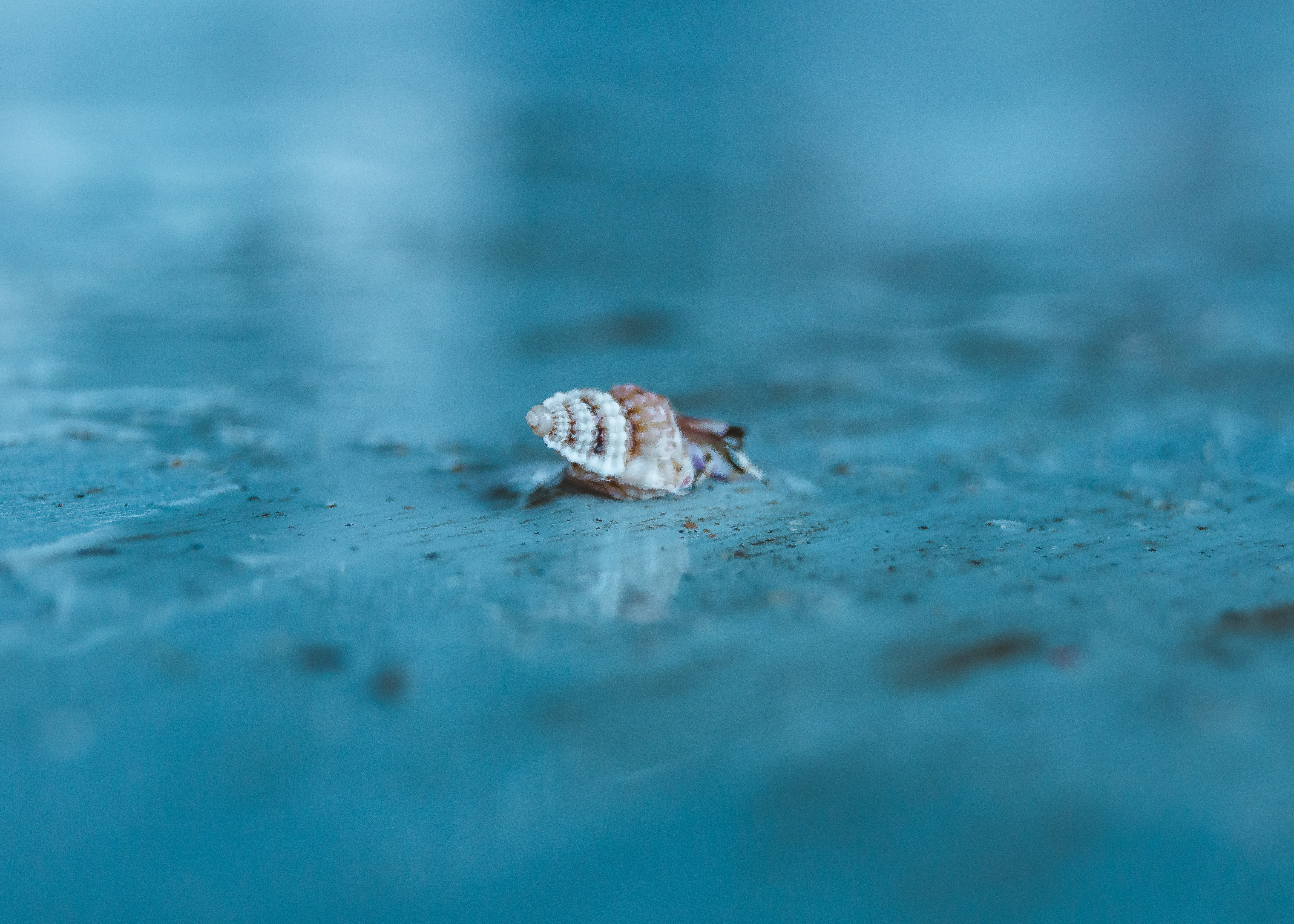 snail crawling on gray surface