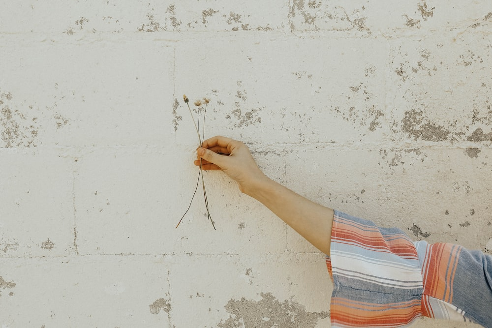 person holding white flower stems