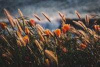 selective focus photography of orange petaled flower field