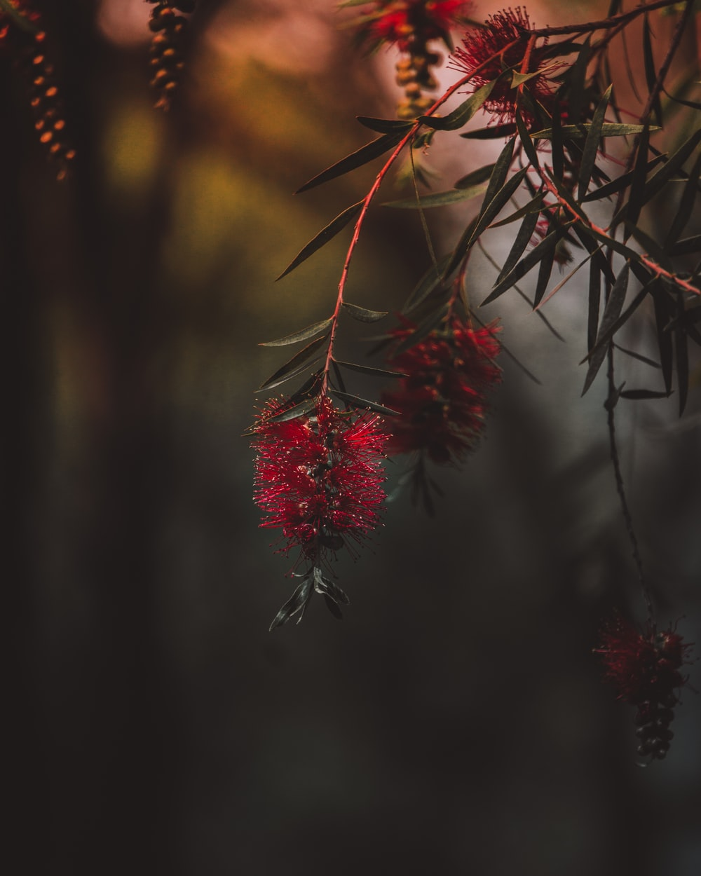 red flowers on green leafed plant