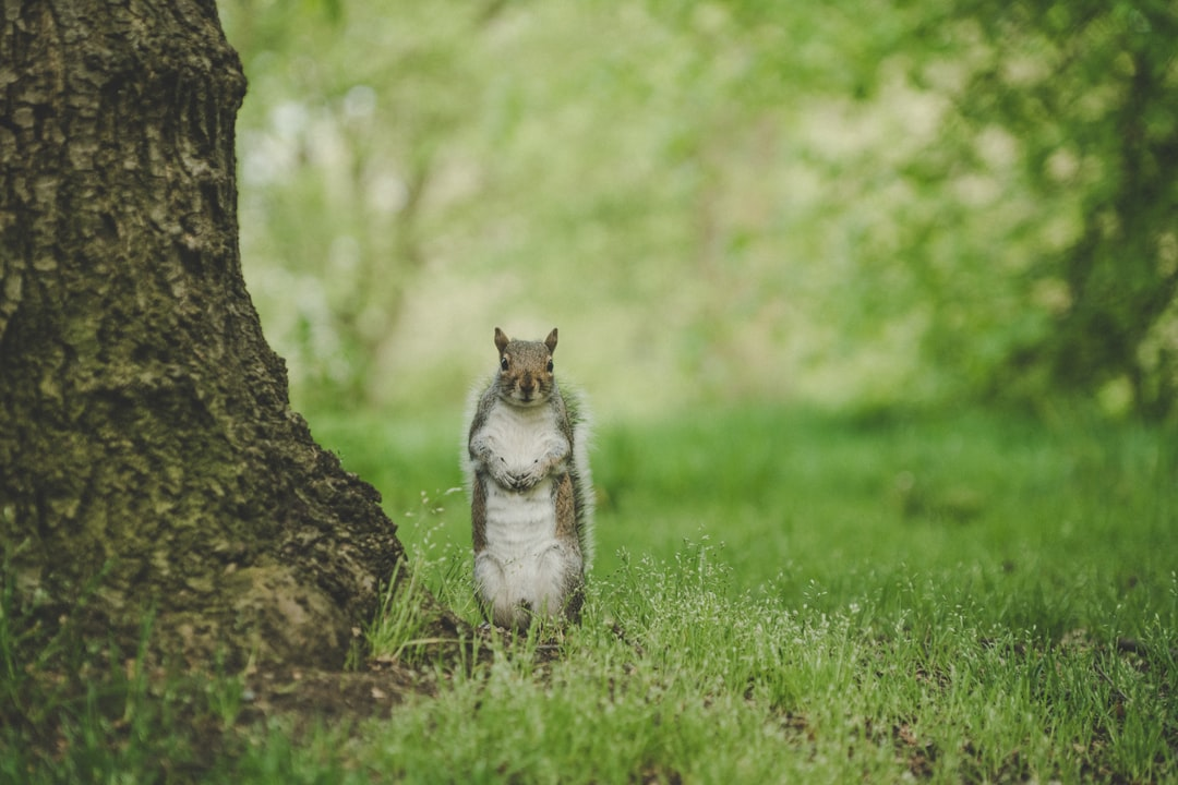 A squirrel in Hyde Park, London