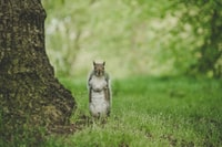 brown and white squirrel near tree trunk