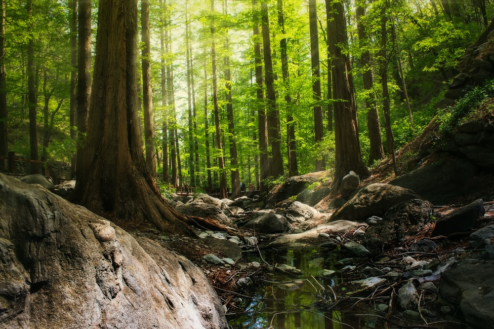 low angle photography of trees in forest