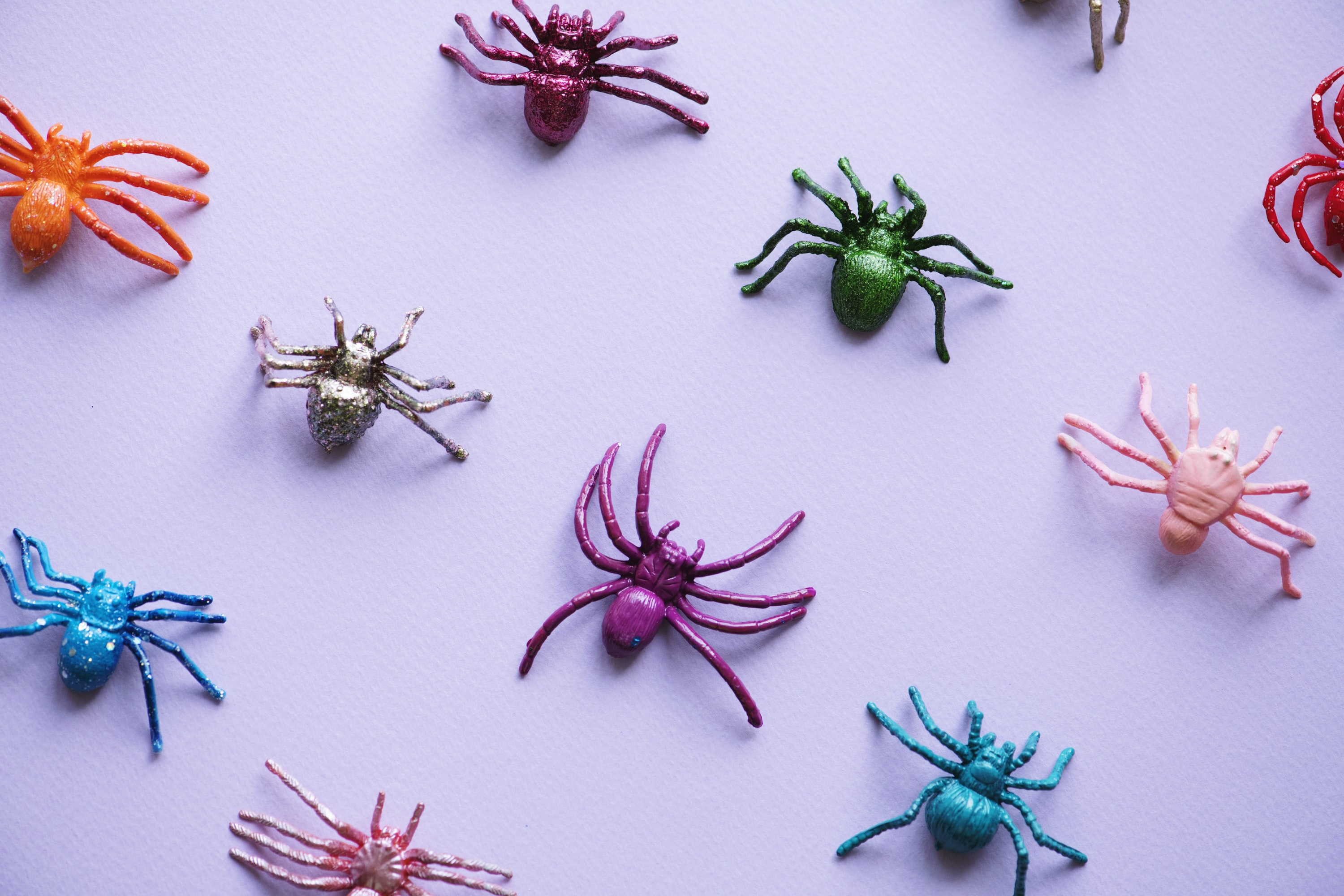 assorted-color spider toys
