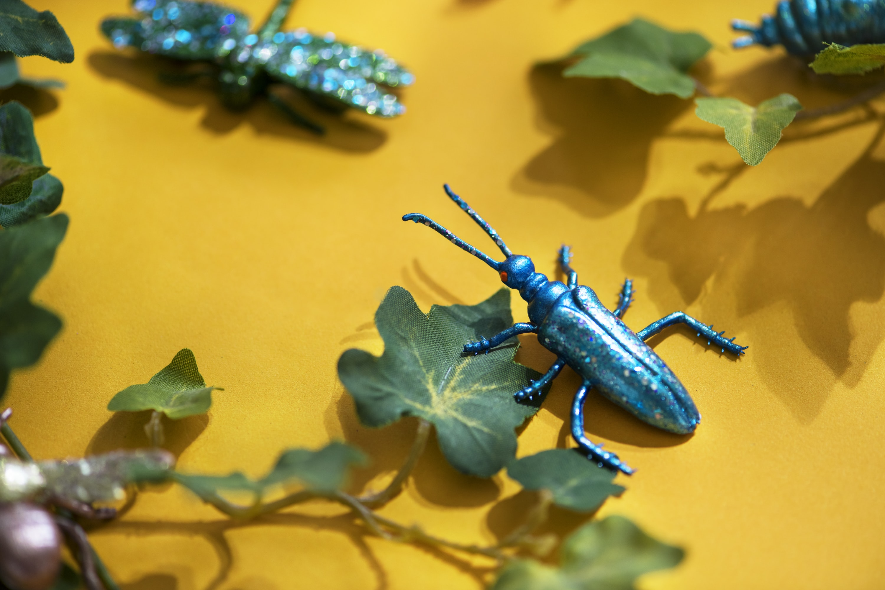 blue and black insect