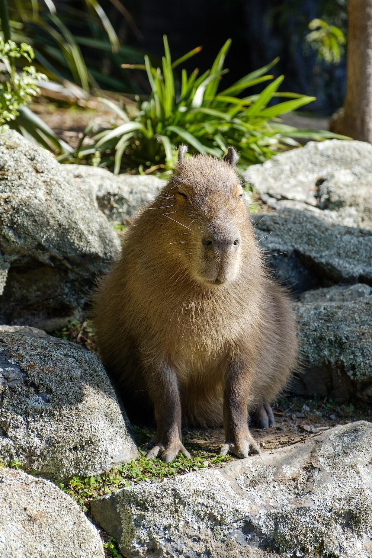 brown 4-legged animal