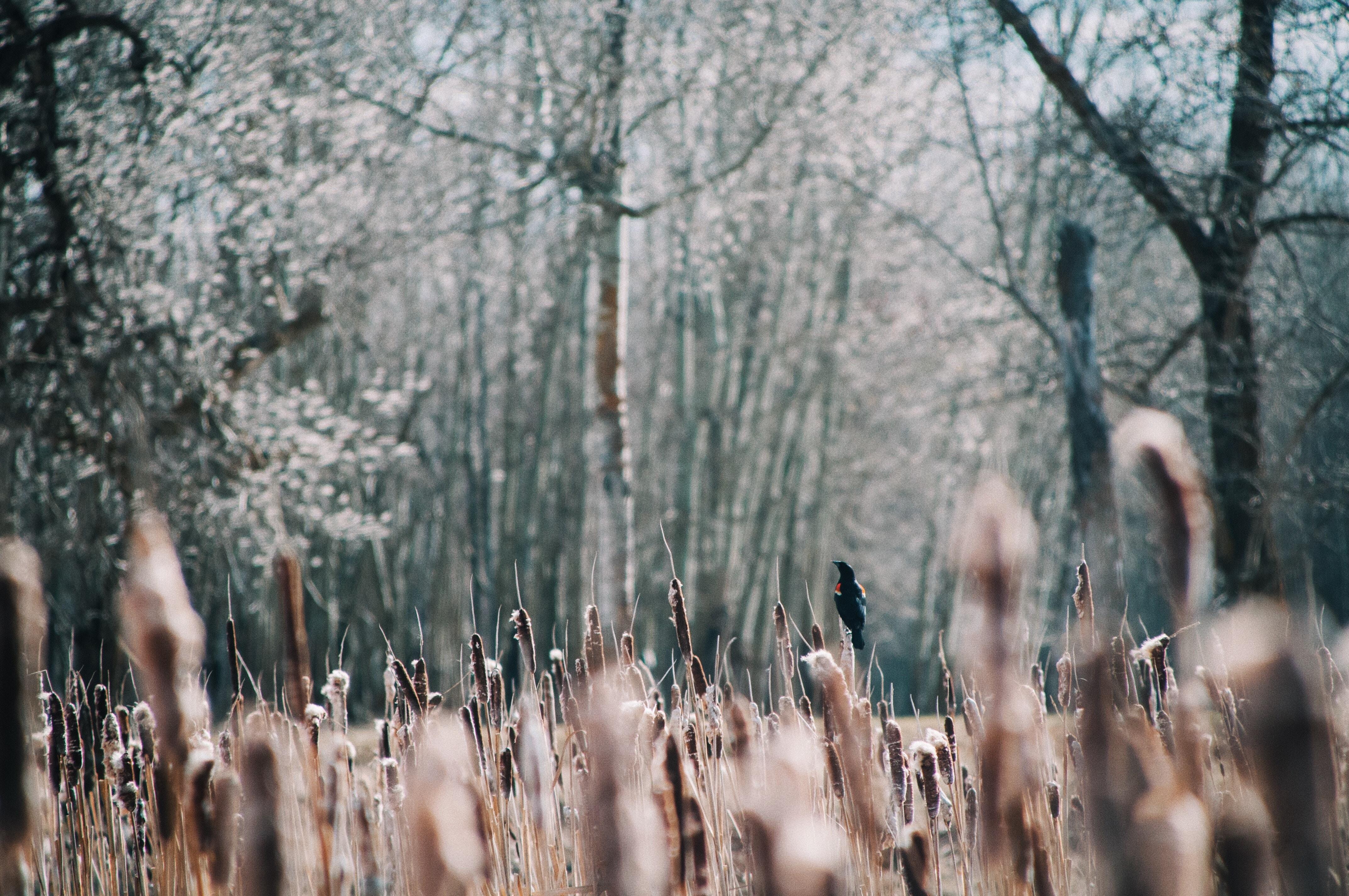 brown grass near trees