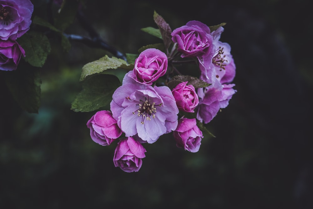 100 flower wallpapers pictures download free images on unsplash pink flowers on branch mightylinksfo