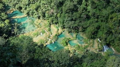 aerial view of green trees guatemala teams background