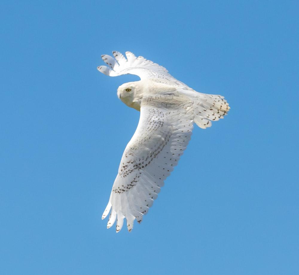 closeup photo of flying white owl