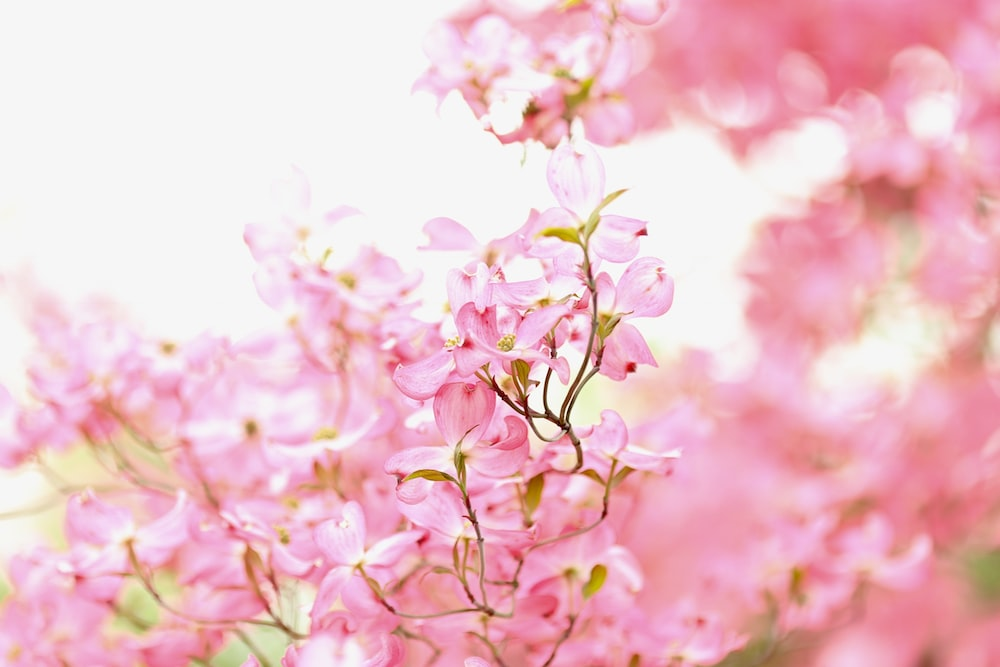 Spring pictures download free images on unsplash spring pictures mightylinksfo
