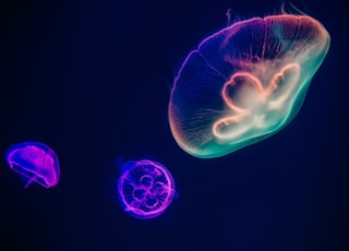 three assorted-color neon jellyfishes
