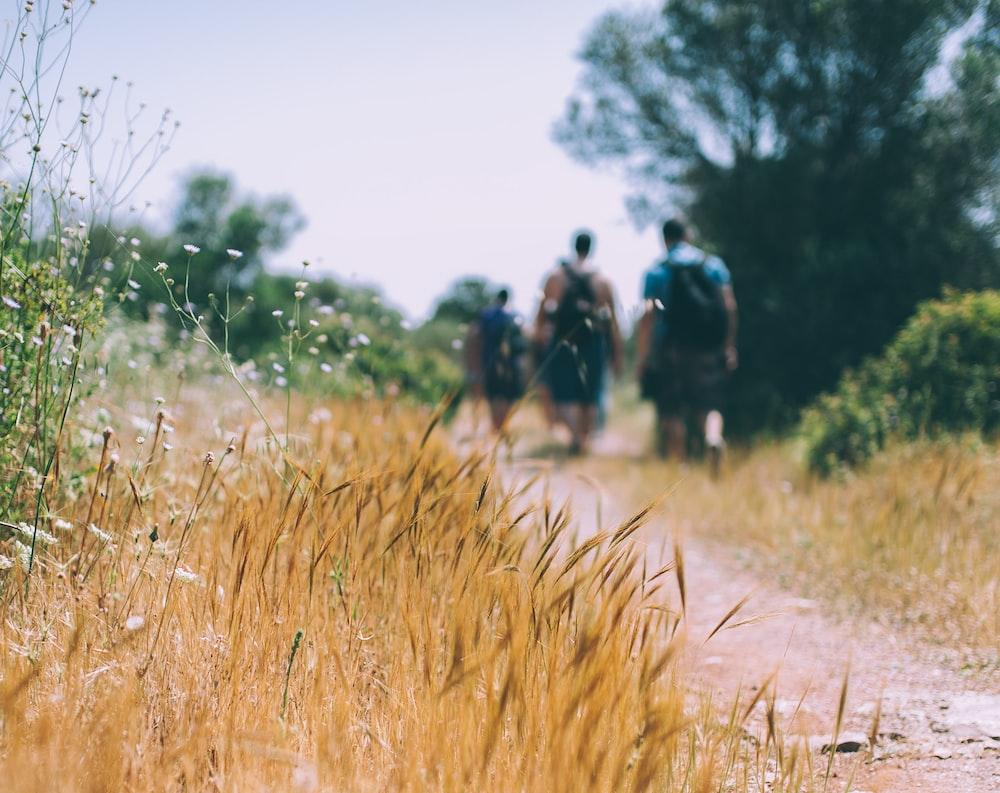three people walking towards the tree