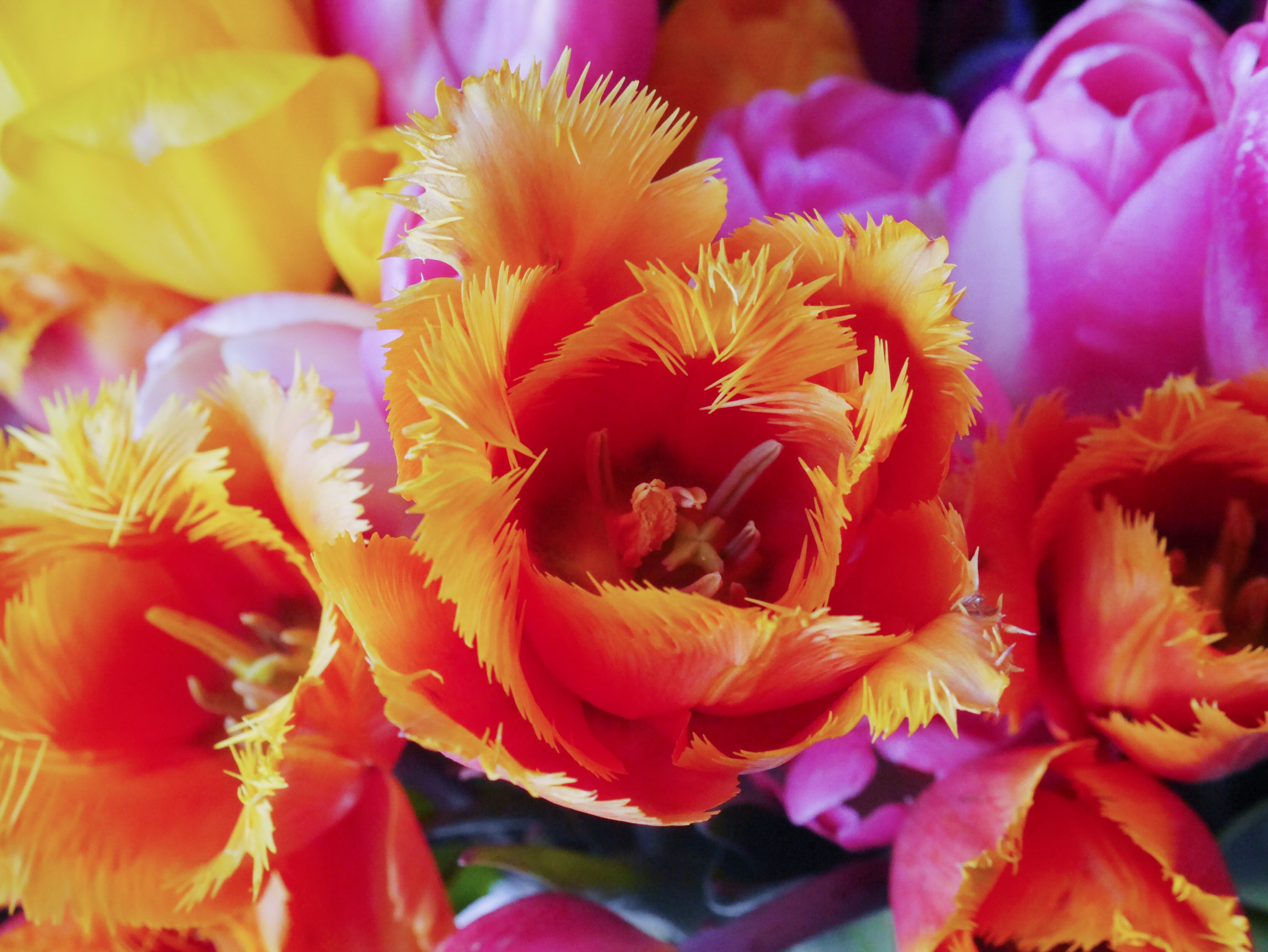 red-and-orange petaled flowers near purple and yellow flowers