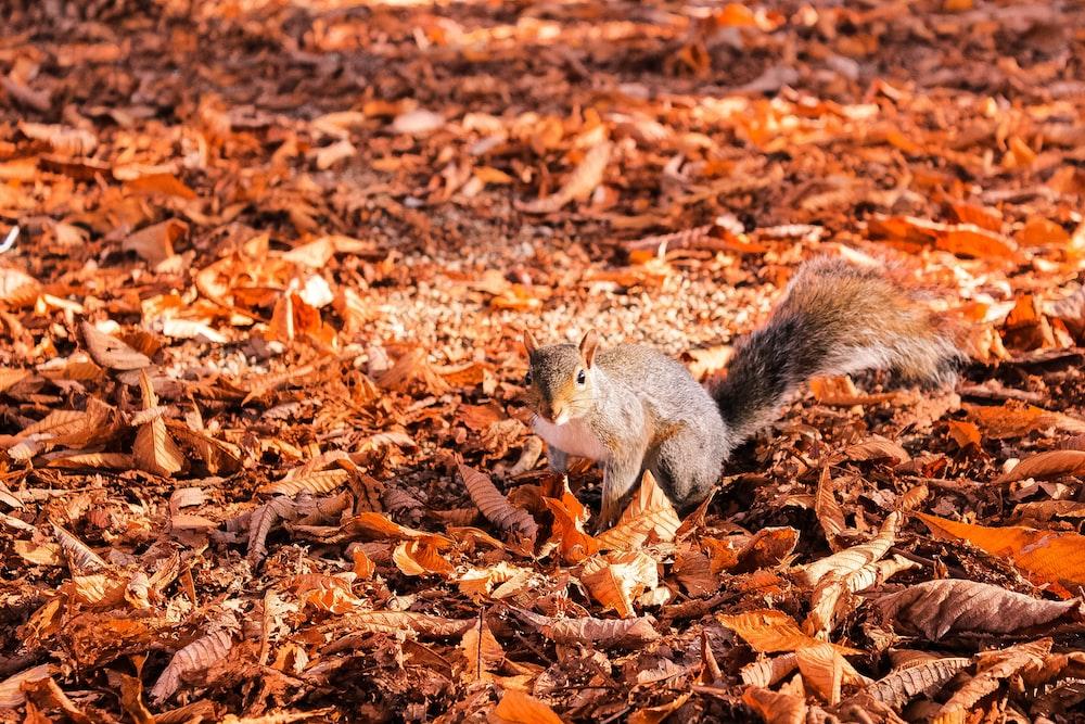 squirrel on leaf at daytime
