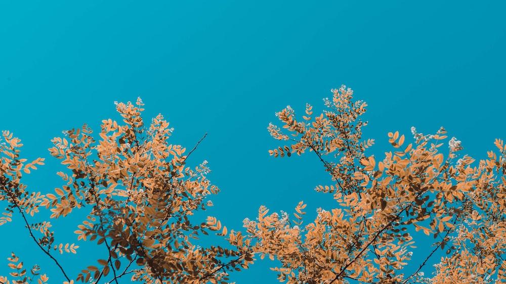 brown flowers tree under blue sky