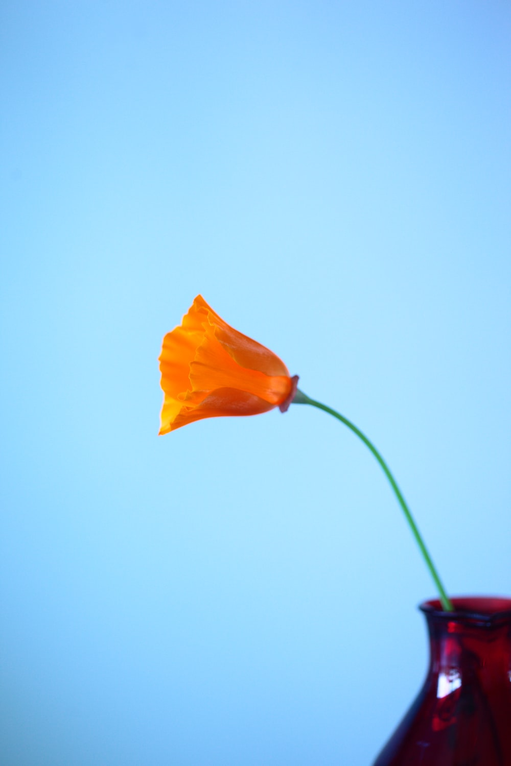 orange flower on red vase