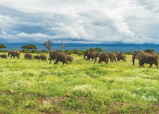 elephants on grass during daytime