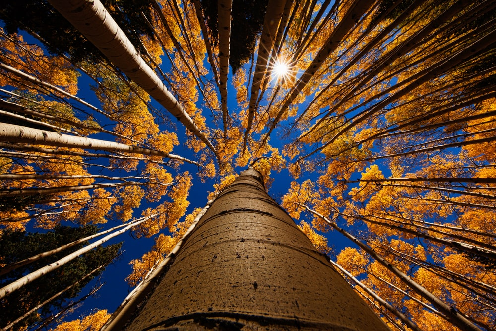low angle photography trees