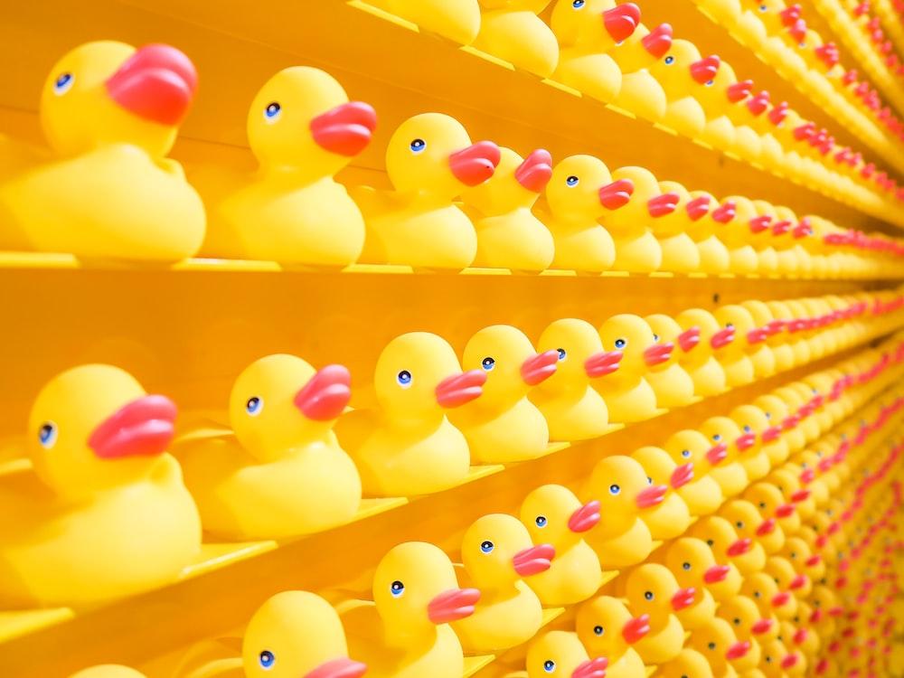 yellow rubber ducks