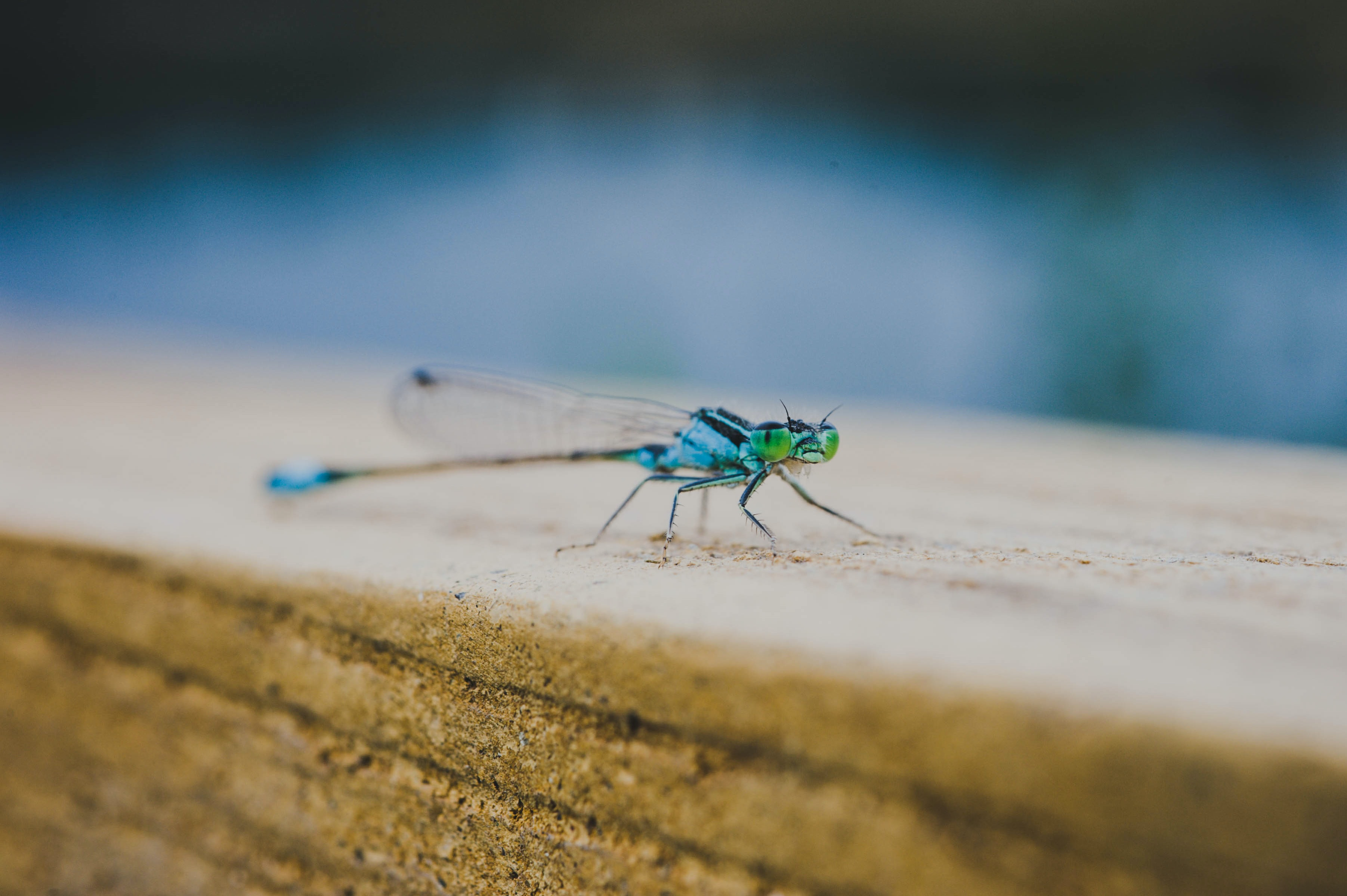 blue and green dragonfly perched on brown wood