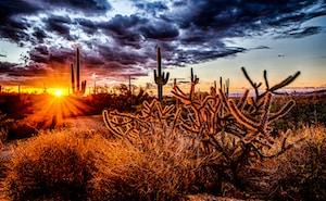 sunlight pass through cactus during golden hour