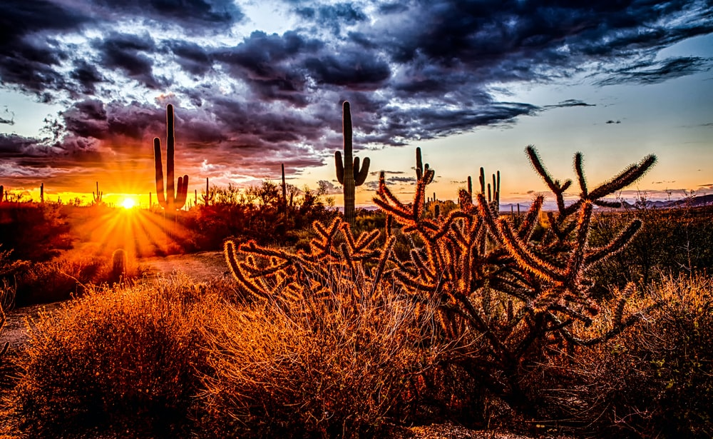 sunlight pass through cactus during golden hour