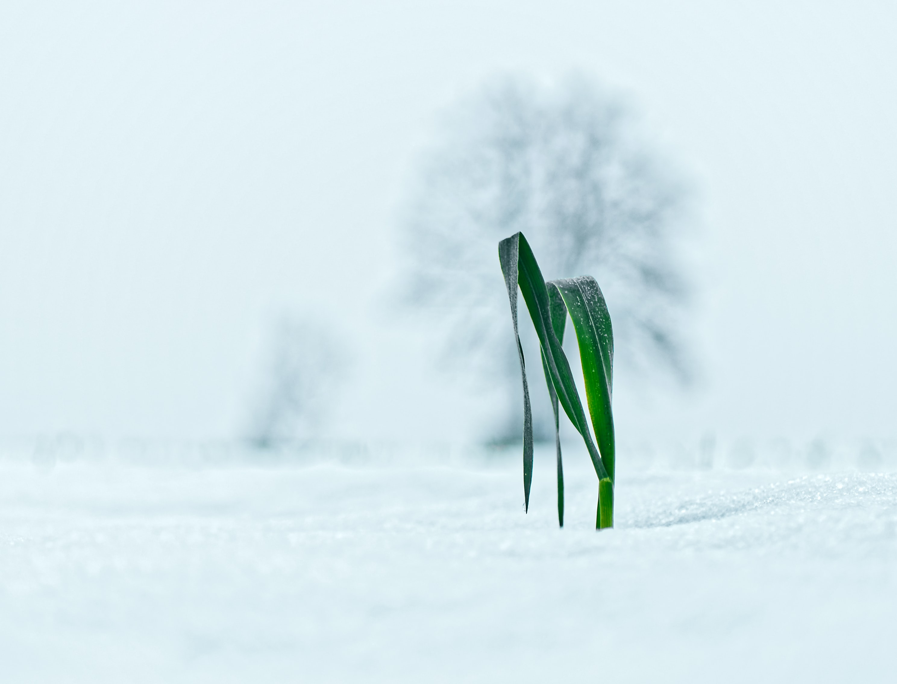 green leafed plant sprouted on icy field