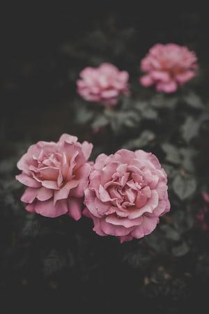 4805. Virágok