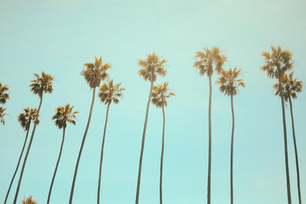 low angle photography coconut tree