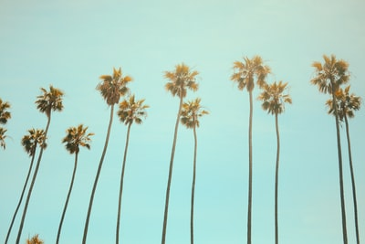 low angle photography coconut tree california teams background
