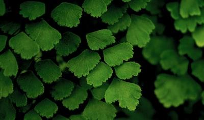 green leaves leafe teams background