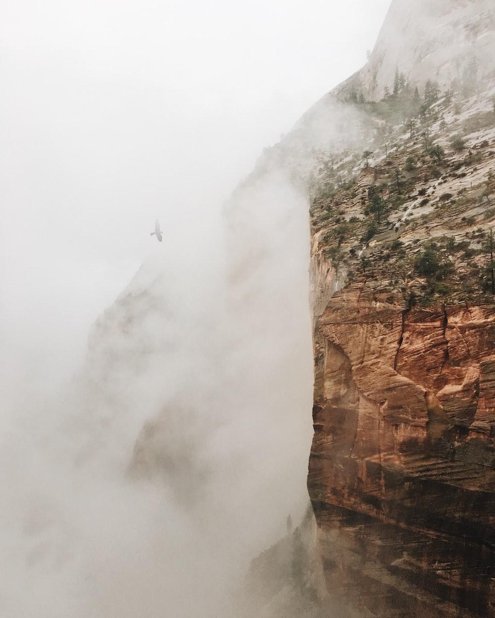 time lapse photography of flying bird near mountain range