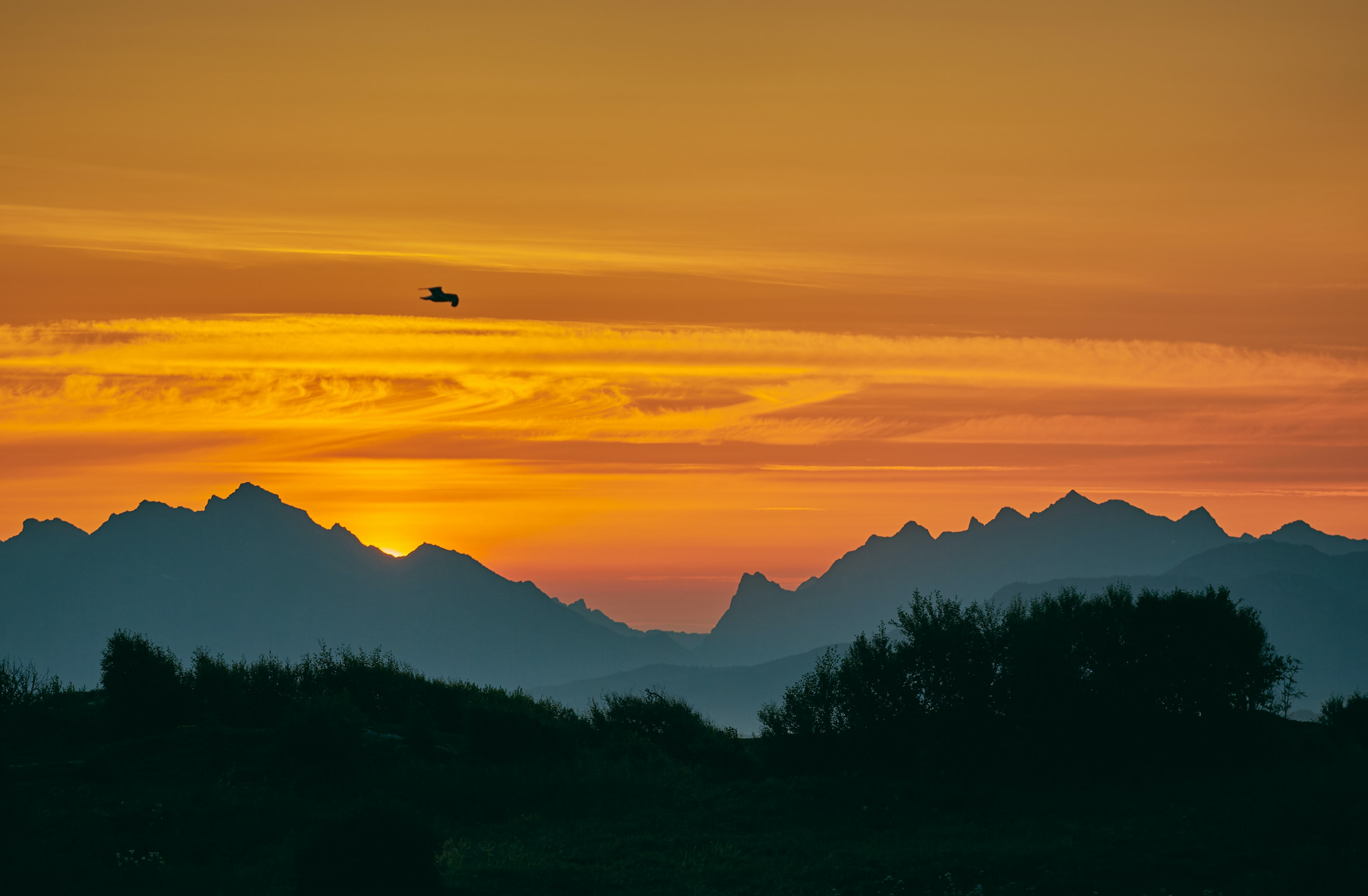 bird over mountain range