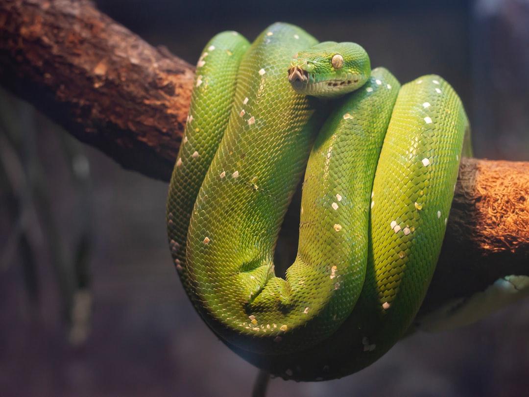 Eva and the Snake