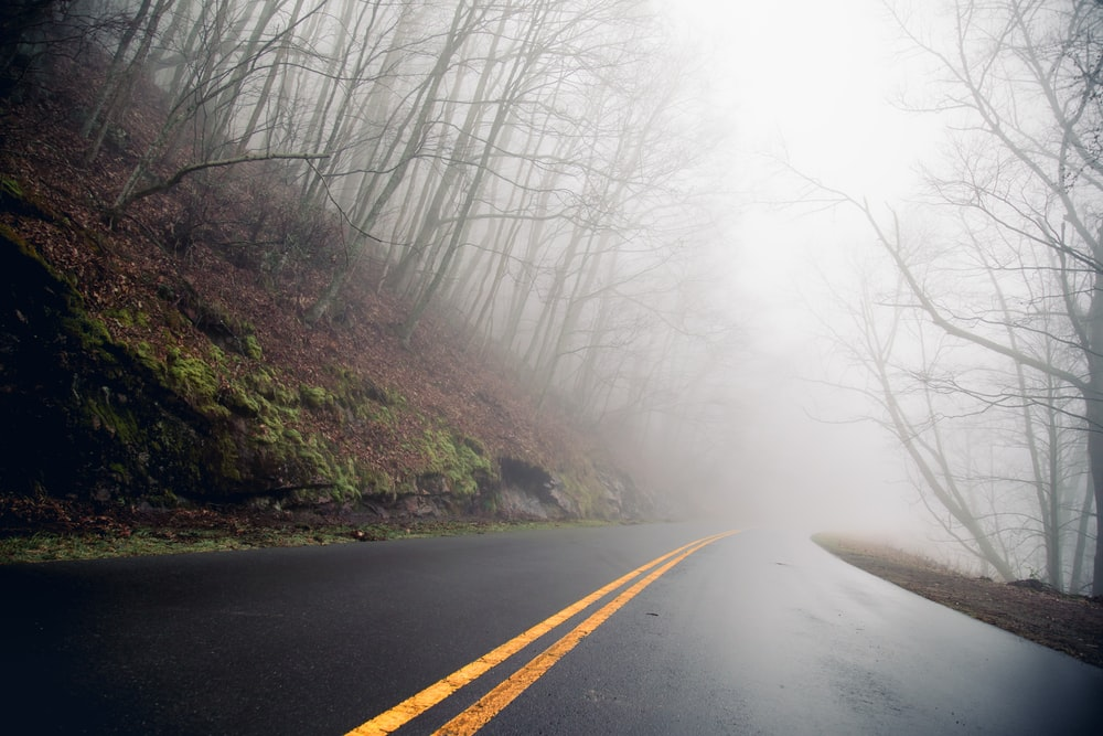road between trees with mist