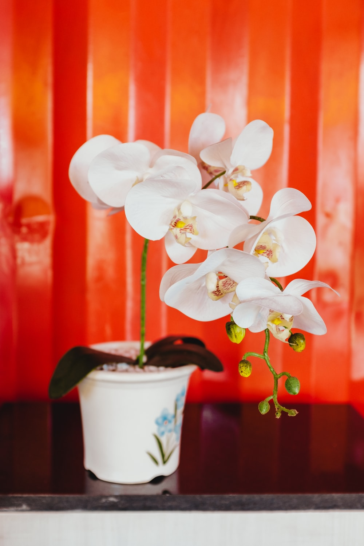white flowers in white plant pot