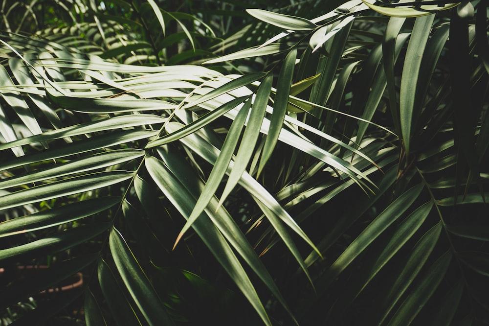 close up photo green trees