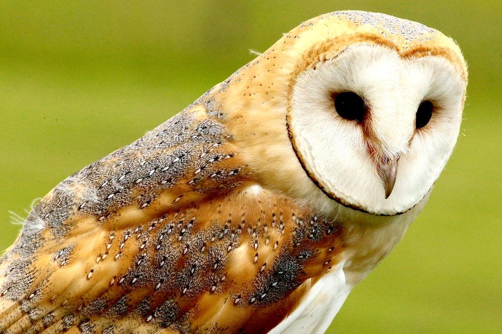 brown owl during daytime