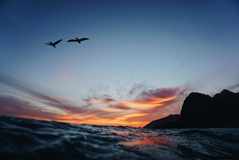 timelapse photography of bird above body of water