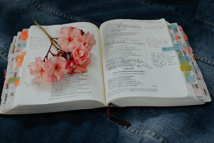 pink petaled flower on book