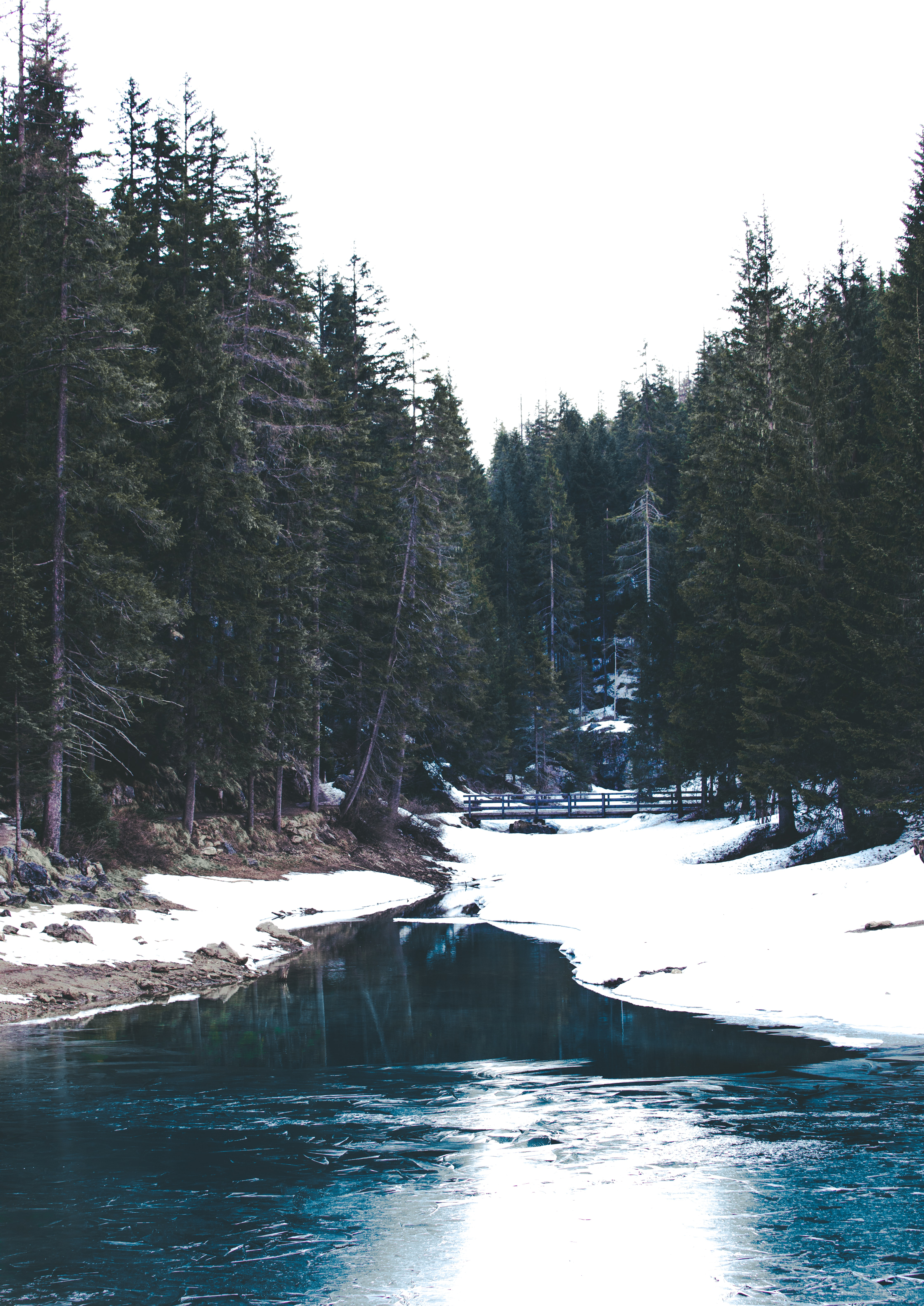 pine trees near river with snow
