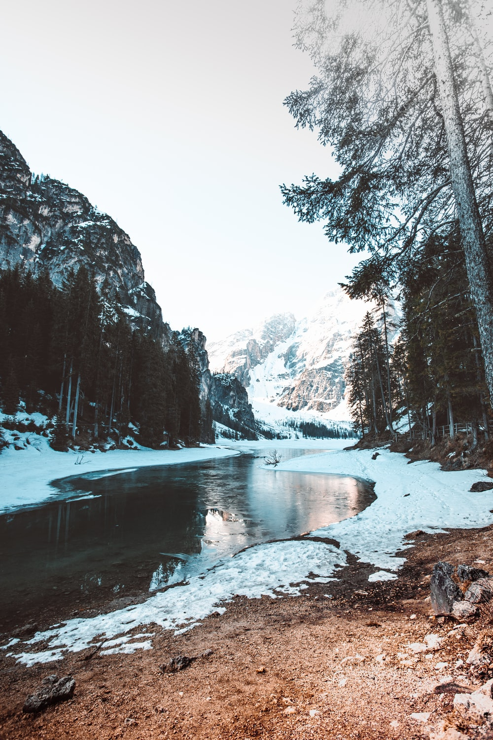 river between trees with snow