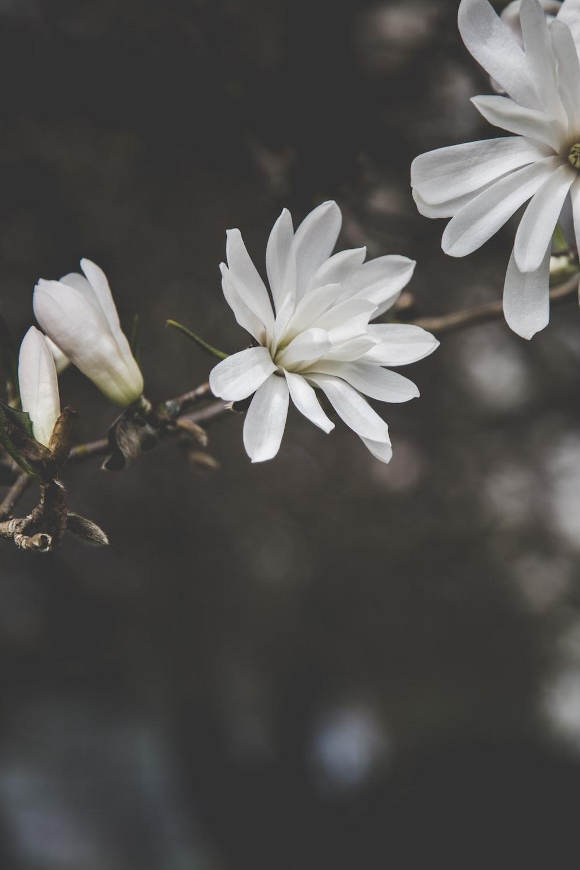 closeup photo of white petaled flower