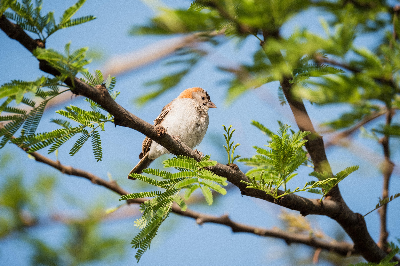 white bird perching on tree branch